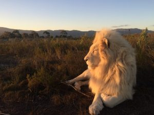 """""""One day you and Lizaene are going to open a lion sanctuary!""""- Cathrine Scharning Nyquist"""